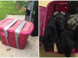 Animal rescue finds box left outside overnight, finds 10 desperate puppies inside