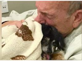 Elderly Dog Dad Dies Of Broken Heart After 16-Year-Old Dog Passes Away