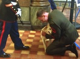 Marine Gets the Surprise of His Life When He Is Reunited with the Patrol Dog He Promised to Bring Home -