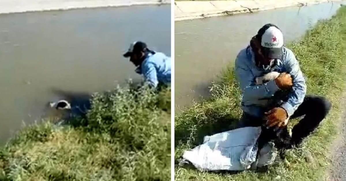Dog Can't Stop Thanking The Man Who Saved Him From Drowning In Canal