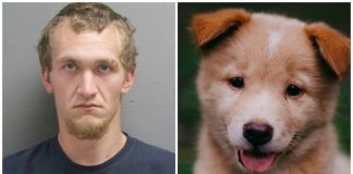Puppy Beaten to Death by Owner's Boyfriend because It Chewed His Headset -