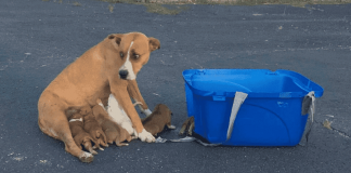 Animal Rescue Group Saves Mama Dog And Her 9 Babies Dumped Like Trash In A Church Parking Lot – Paws Planet – World Animal News