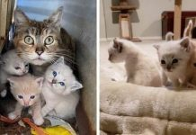Cat Mom Shields Her Kittens In Backyard Until Rescue Arrives – Paws Planet – World Animal News
