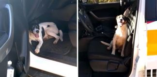 Police Officers Return To Patrol Car And Find An Abandoned Dog Waiting Inside For Help – Paws Planet – World Animal News