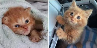 Rescued Kitten Insists On Staying With Family That Nursed Him Back To Health – Paws Planet – World Animal News