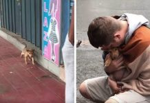 Tiny Stray Puppy Wags Her Tail At Every Passerby, Hoping Someone Will Adopt Her – Paws Planet – World Animal News
