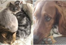 10+ Photos That Show Pets Make Our Lives Just As Fun And Loving – Paws Planet – World Animal News