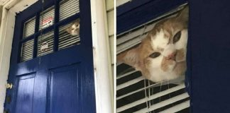 Rescue Cat Gets Mad When His Mom Goes Outside Without Him – Paws Planet – World Animal News