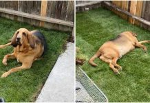 Rescue Dog Gets Best Ever Surprise When His New Parents Build Him A Yard – Paws Planet – World Animal News
