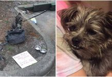 Poor Puppy Was Tied To A Dumpster And Left With A Heartbreaking Note