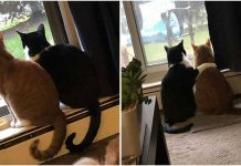 Sweet Cat Comforts His Scared Brother During Thunderstorm