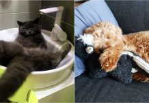 20+ Adorable Photos Of Sleeping Animals That Will Get You Hooked