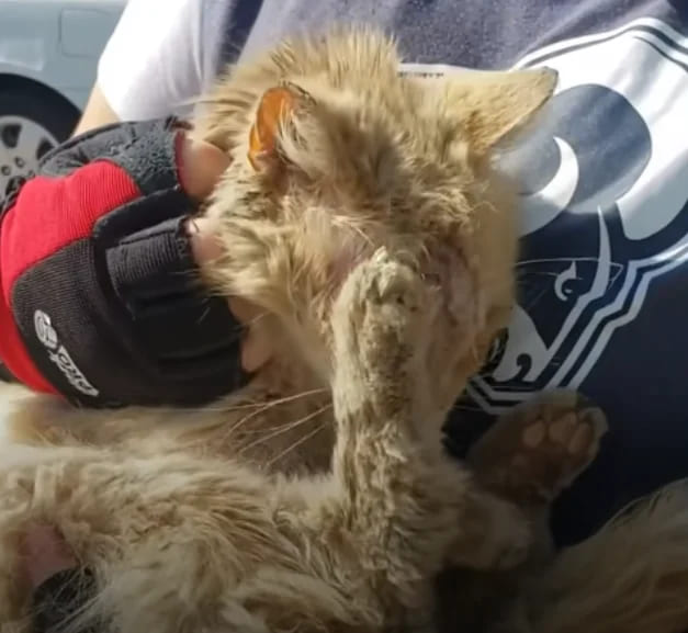 Abandoned Cat Won't Stop Kissing His New Mom On Her Nose | Animal Shelters Near Me