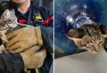 Indonesian Firefighters Rescue Kitten Stuck Inside Water Jug