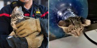 Indonesian Firefighters Rescue Kitten Stuck Inside Water Jug