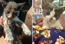 Kitten Pulled From L.A. Wildfire Just Wants Someone To Hold Her