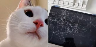 Owner Finds A Bunch Of Her Cat's Selfies After Leaving Her iPad Unattended