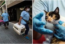 Rescuers Search And Save Animals From Wreckage After Beirut Explosion