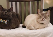 These Two Blind Cats Never Let Their Disability Stop Them From Living Life
