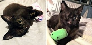 Kitten With One Eye And A Cleft Lip Finally Found Her Forever Home