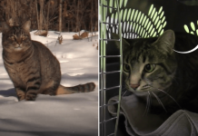 Guy Sees Cats Living Out In The Snow And Is Determined To Save Them