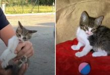 Guy Saves Poor Kittens From Streets And Helps Them Find Forever Homes