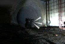 Nice Guys Rescue Terrified Kitten Stuck In Storm Drain