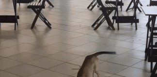 This Stray Dog Keeps Visiting A Café, Even During The Lockdown