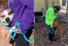 Meet Grateful Rescue Dog Toro Who Keeps Hugging Everyone He Meets
