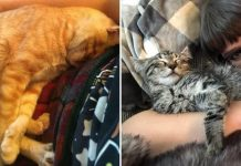 Pet Owners Shared Their Precious Adoption Moments That Will Make Your Day Warmer
