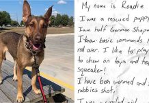 Shepherd Dog Found Left Abandoned With A Message In A Bottle Tied To Her Neck