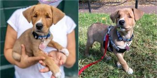 Stray Puppy With A Born Squint Is Given A Second Chance For A Happy Life