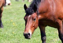 Veteran Horse Insurance