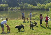 Trave with your dog in Barkwells in North Carolina